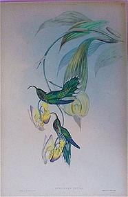 "John Gould Hummingbird ""Eutoxeres Aquila"""